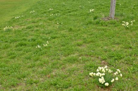 Pflanzaktion Gartenbauverein Hohenlinden